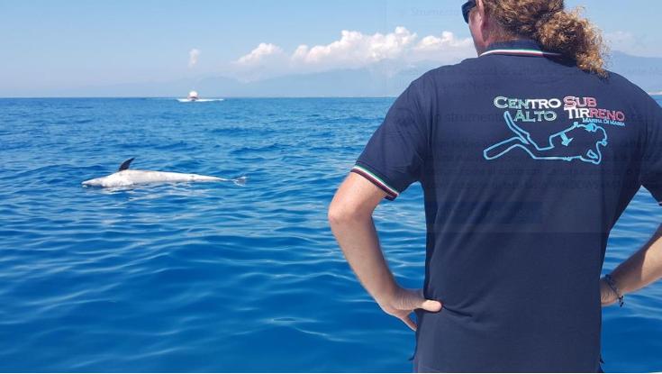 Alto Tirreno mammiferi marini Konsumer difesa dell'ambiente